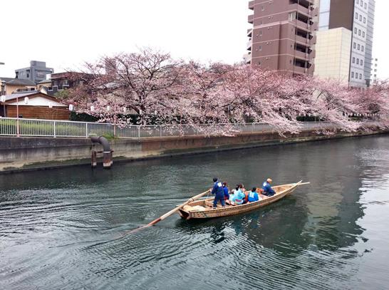 150329大横川桜1.jpg