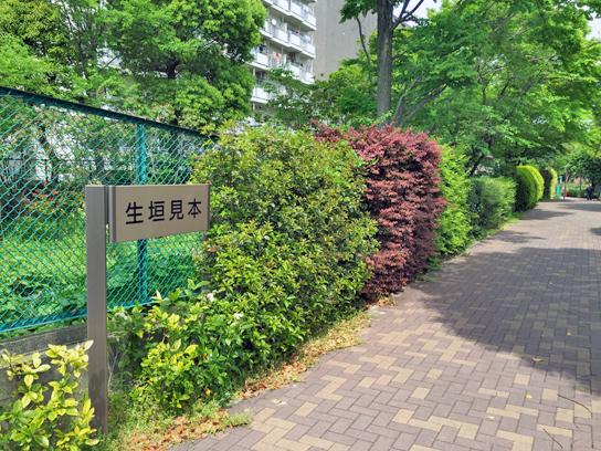 150429生け垣見本2.jpg
