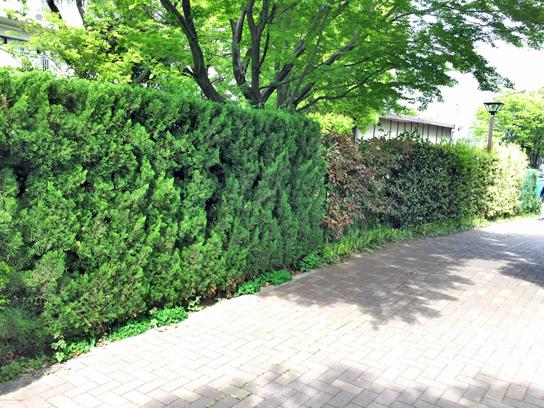 150429生け垣見本3.jpg