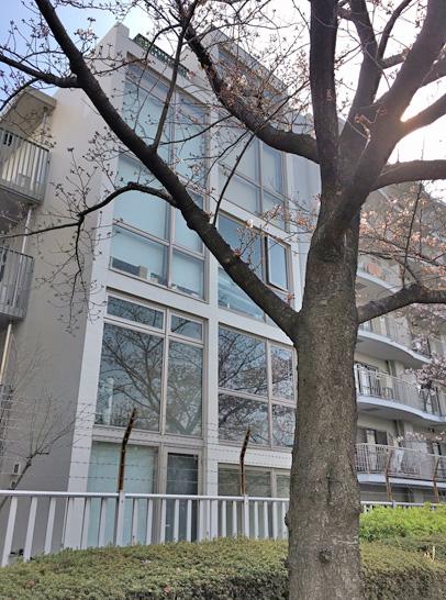 170407大横川桜3.jpg