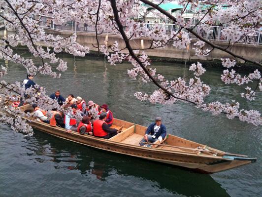 大横川桜3.jpg