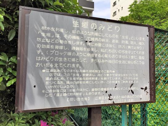 150429生け垣説明.jpg
