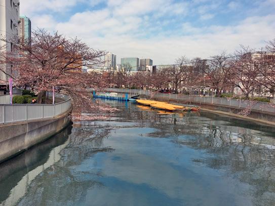 170403大横川さくらまつり.jpg