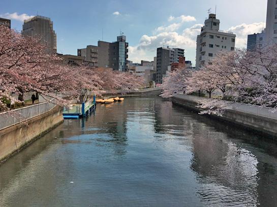 170407大横川桜1.jpg